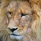 Lion Head by jarrodb