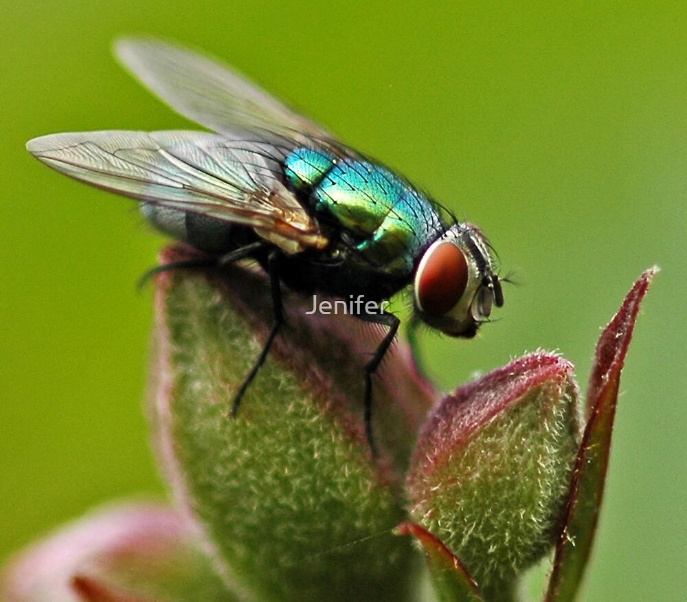 Fly by Jenifer