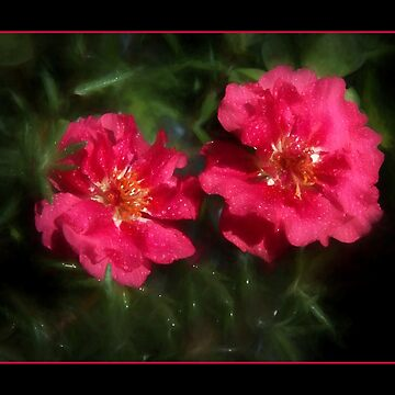 Misty Raindrops On Moss Rose by wcpadgett