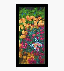 Garden Color Mix Photographic Print