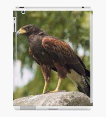 Harris Hawk iPad Case/Skin