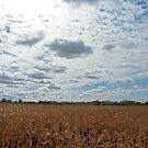 Bright Sky filled with Clouds - Landscape Photography by Barberelli