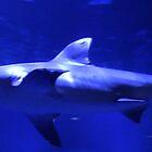 Bull Shark by Rixoppida