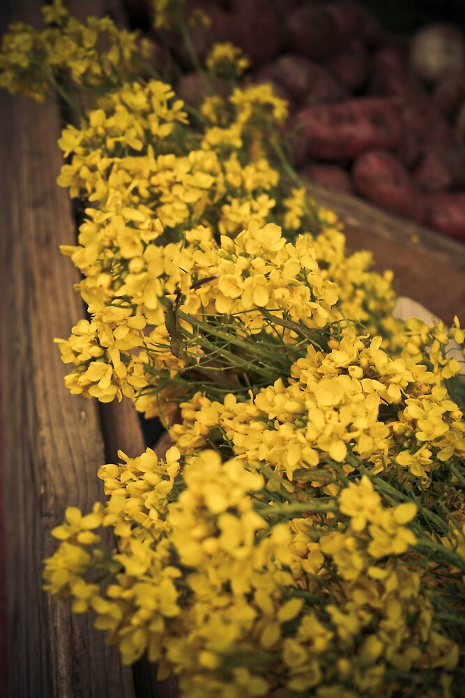 Yellow Flowers by bethstedman