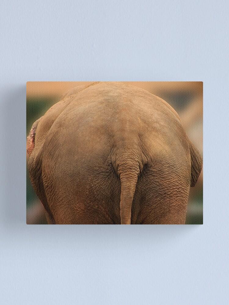 Alternate view of Elephant Butt Canvas Print