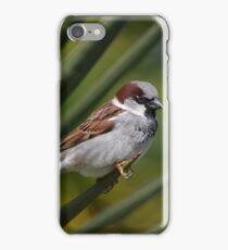 Sparrow and the Spike iPhone Case/Skin