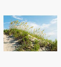 Sand Dunes With Grass - Outer Banks Photographic Print