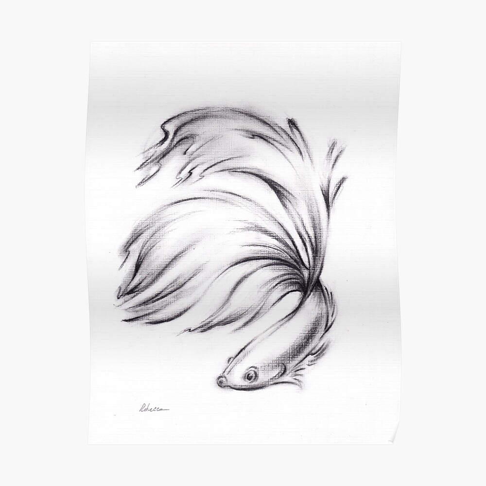 Betta charcoal pencil drawing of a siamese fighting fish poster