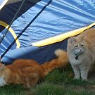 We are some camping cats by Lori Durocher