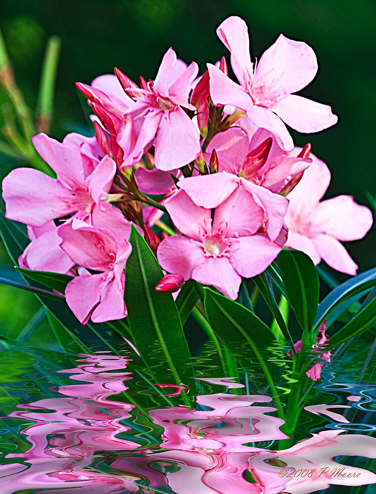 Pink Reflections by Pat Moore