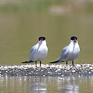 Chillin' pair by eyes4nature