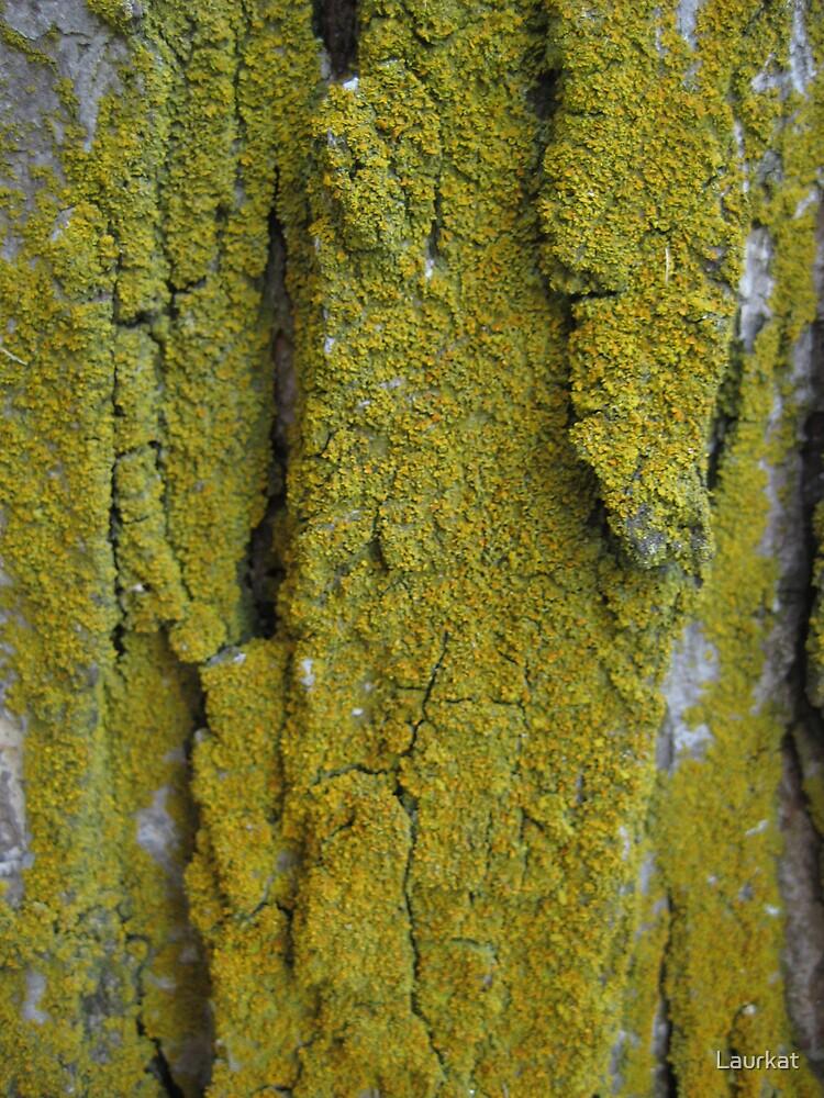 roadside barkwood in summer by Laurkat