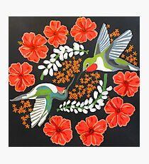 Lámina fotográfica Mandala colibrí