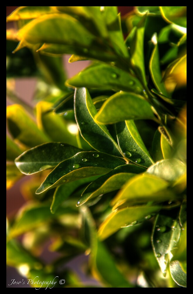 Green Green Leaves by Stephen Joso