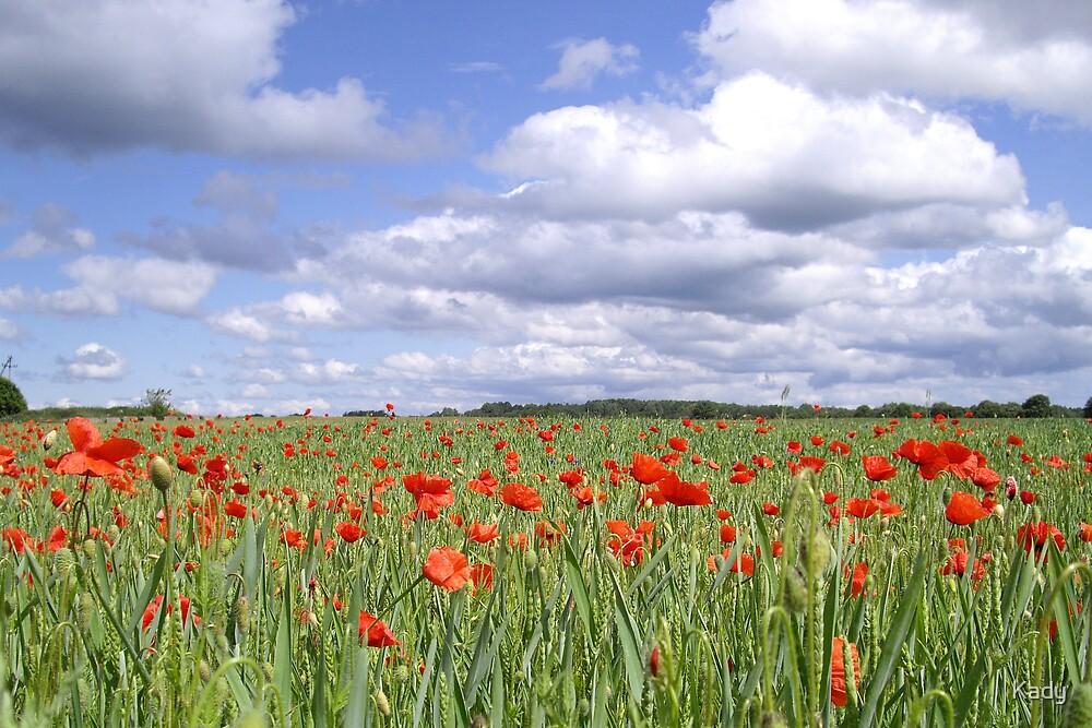 Field of poppies under cloudy sky by Kady
