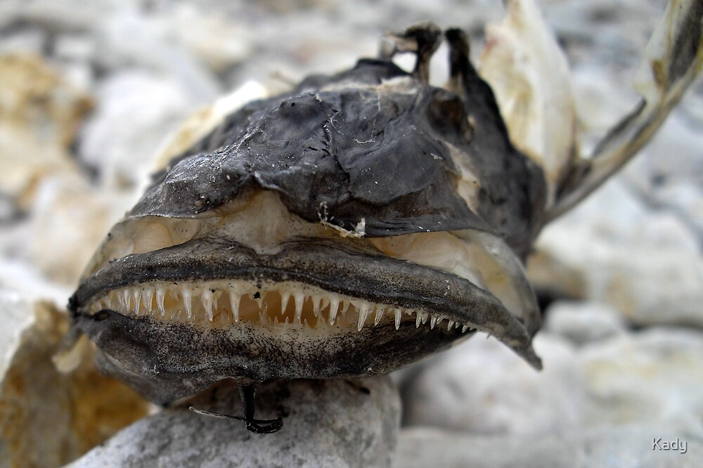 Dead esox smile by Kady