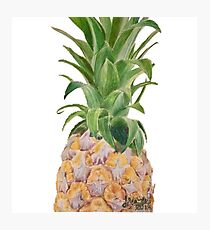 Color Pencil Pineapple  Photographic Print
