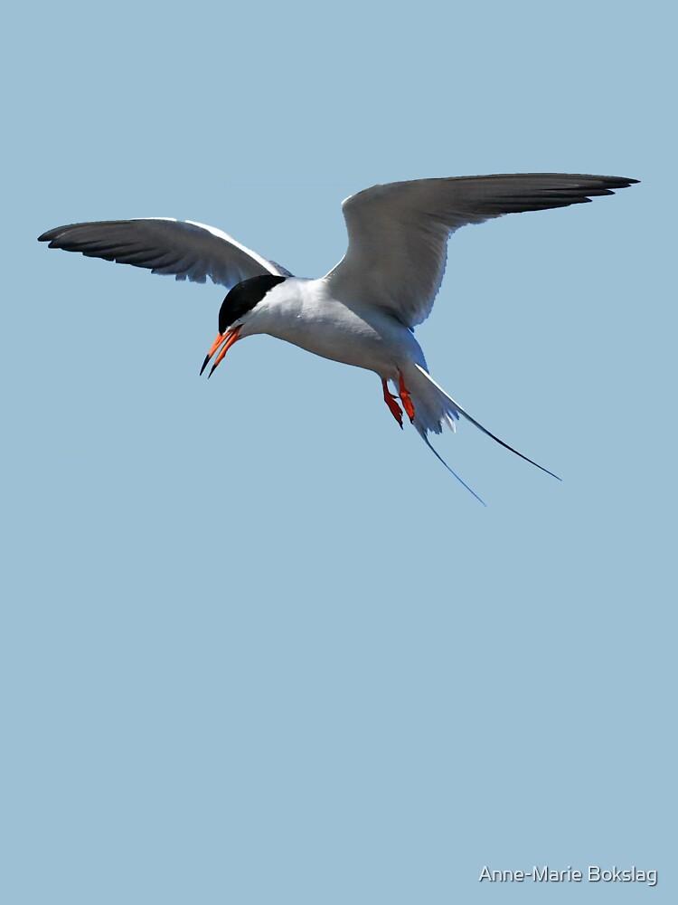 Californian Least Tern by amb1946