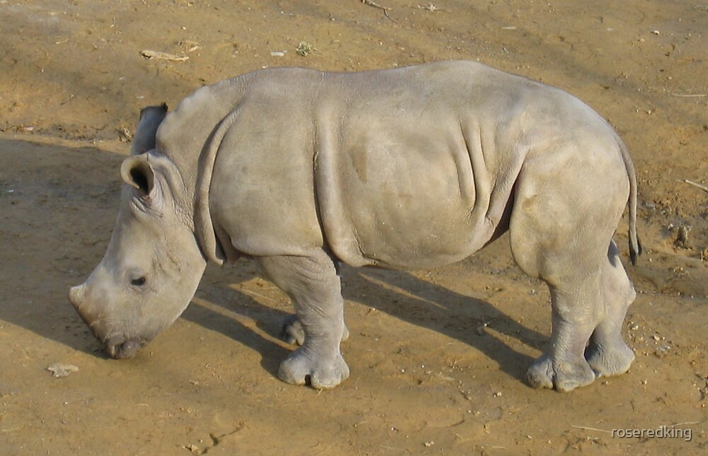 Baby Rhino. by roseredking