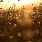 Golden Bunny Tails by Alex Evans