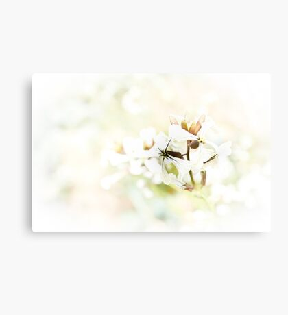 Rocket Flower Canvas Print