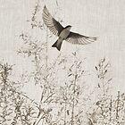 Tree Swallow by CarolM
