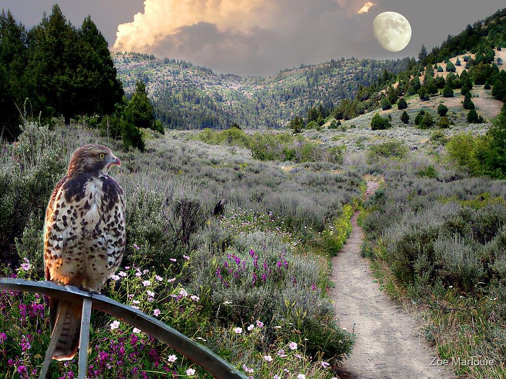 Juniper Trail Road by Zoe Marlowe