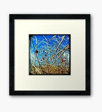 Red in the Blue Framed Print