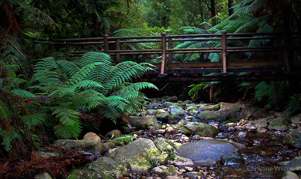 Badgers Creek  by Christine Wilson
