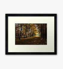Mystical, Magical, Fairytale Forest Framed Print