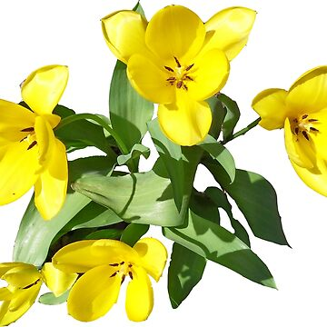 Yellow Flowers by antonioluppino