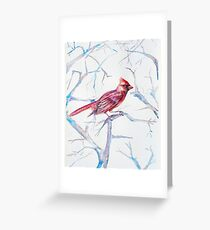 Northern Red Cardinal Greeting Card