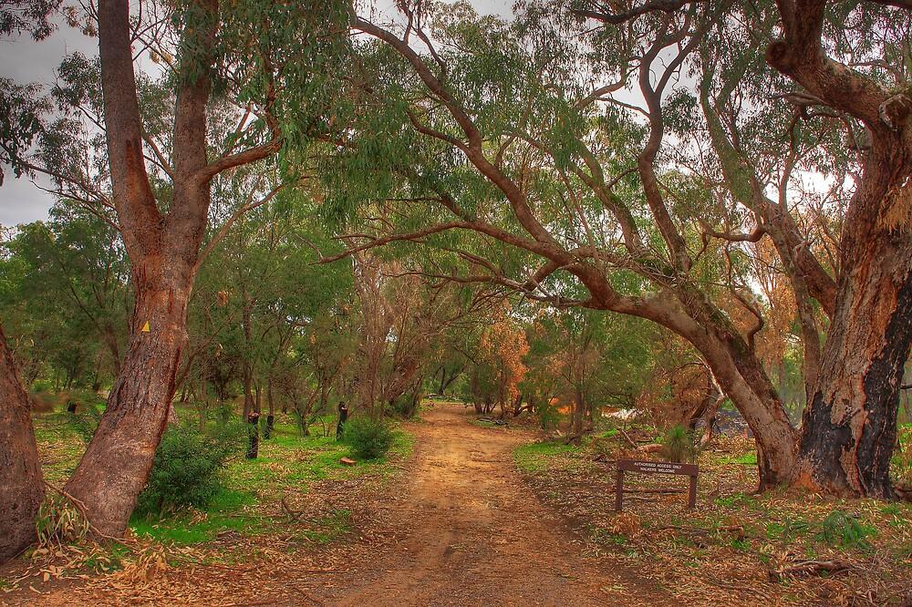 Ghost House trail HDR by georgieboy98