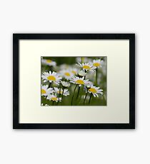 Daisies in Spring - Gorgeous Nature Shot Framed Print