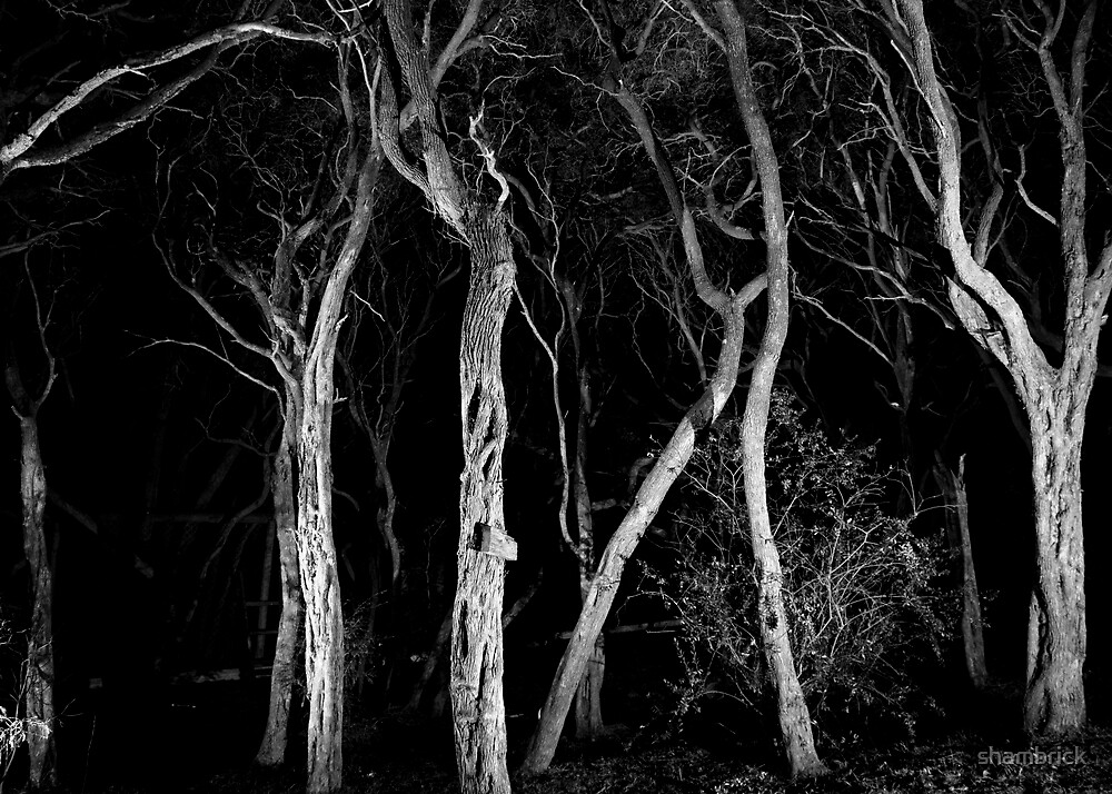 Midnight in the Garden of Good and Evil by shambrick