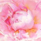 Lovely Peony by daphsam