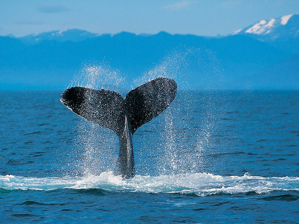 whale tail by luxiggy