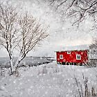 Winter Secret by Philippe Sainte-Laudy