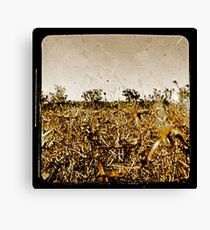 Wild Fields Canvas Print