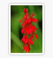 Scarlet Lobelia Sticker