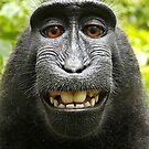 Macaque Selfie by Zehda
