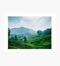 Tea Plantation, Malaysia. Art Print