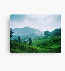 Tea Plantation, Malaysia. Canvas Print