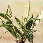 Lilies Number 648 by CJAnderson