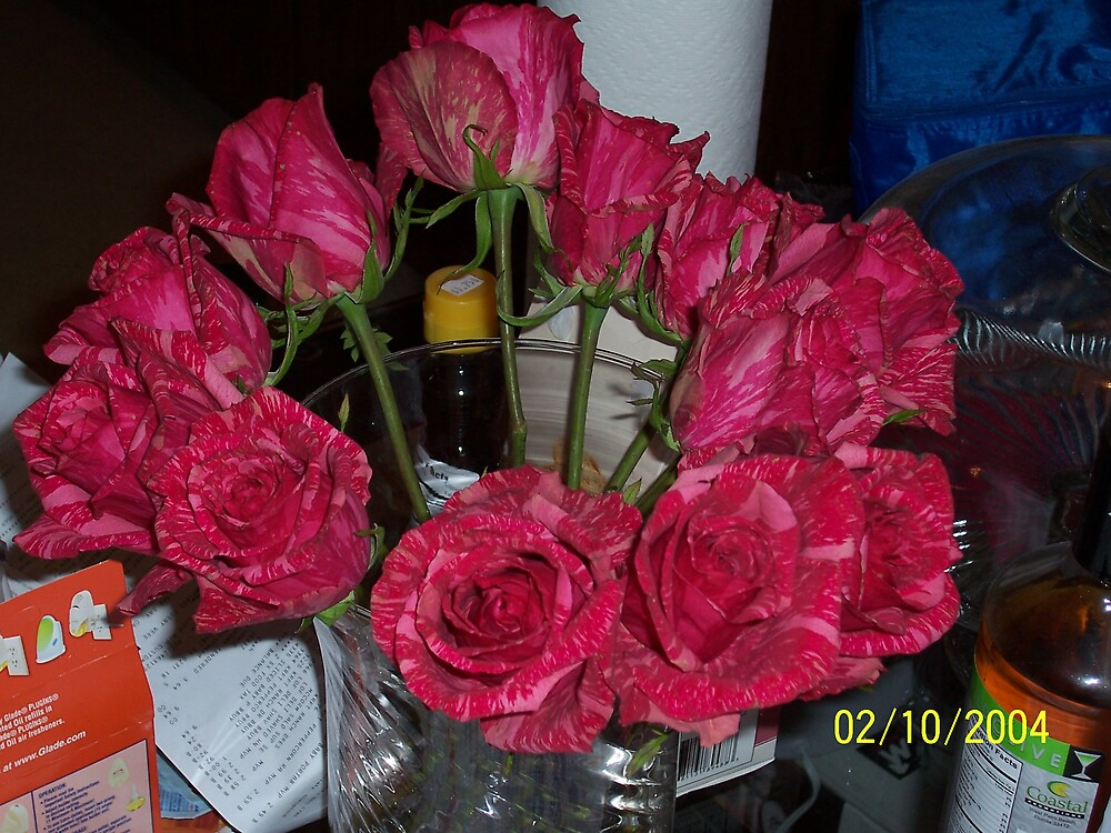 Crimson & Pink Roses Take #2 by phursey1