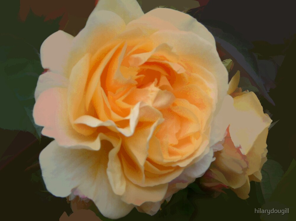 abstract of Peach Rose by hilarydougill