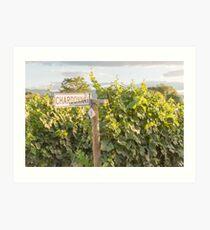 Chardonnay Vines Art Print