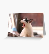 Nap Time Kitty Greeting Card