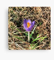 First Sign of Spring Canvas Print