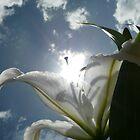 Sun Lilly by Kimberley Davitt